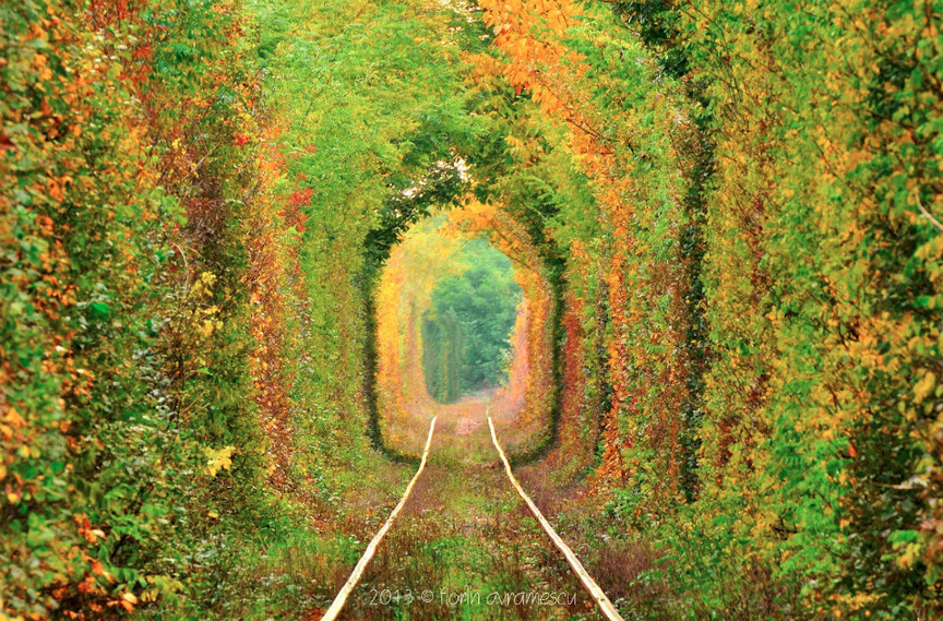 Most Beautiful Train Tunnel In The World Photography By: Avramescu Florin
